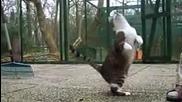 смешни котки скачат напред и назад