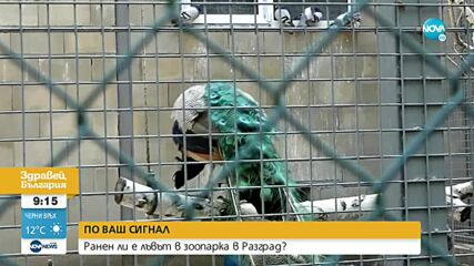 Ранен ли е лъвът в зоопарка в Разград?