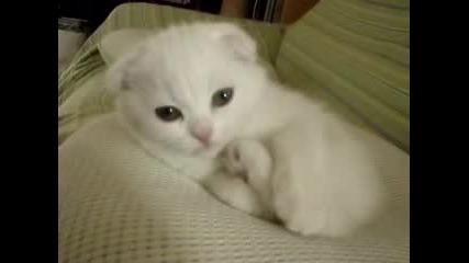 Малко Коте Се Ближе
