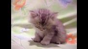 Изморено Малко Коте