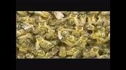 Календар на Пчеларя за м. Ноември