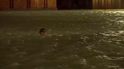 """Мъж плува във водите на площад """"Сан Марко"""" във Венеция"""