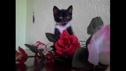 Любимото ми котенце! Босле! :)