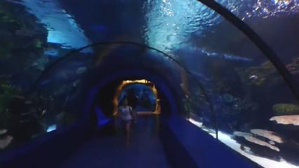 Най-големият аквриум-тунел - Турция