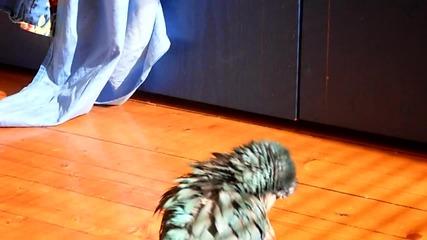 Папагал монах се къпе