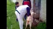 козите на Пъдарско