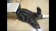 Дебела Смешна Котка