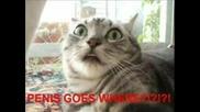Смешни Котки (част 1)
