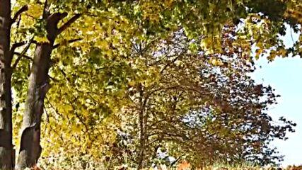 """""""Моята новина"""": Колко изящно остаряват и падат листата!"""