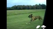 Куче Скача От Прозореца На Кола В Движение