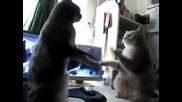 Котки си играят на плесни ми лапичката