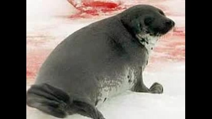 Sos, Save Our Seals!