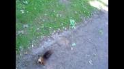 любопитна катеричка,  Лайпциг,  Йоханапарк,  squirrel,  Leipzig