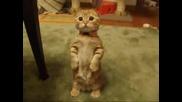 Най-сладкото коте!