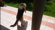 Куче за първи път забелязва своята сянка.