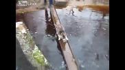Котка пресича река по смешен начин :)