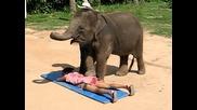 Слон масажира жена
