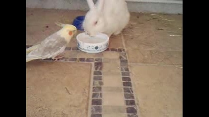 корела и зайче