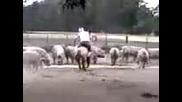 Луди селяни яздят прасе! (смях!!)