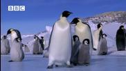 Забавно пързаляне с кънки - Императорските пингвини