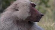 Животът на приматите