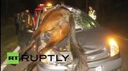 Кон се заби в предното стъкло на кола по време на пътен инцидент в Испания
