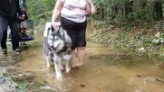 USA: Families, furry friends stay high and dry in flooded Leland