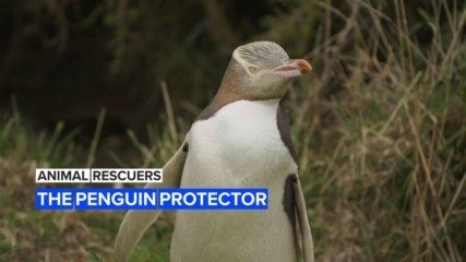 Animal Rescuers: The woman protecting New Zealand's penguins