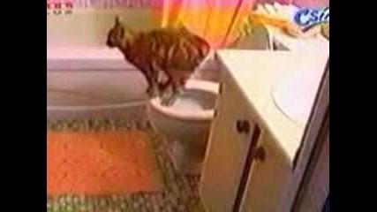 Добре Възпитана Котка