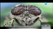 Как ни гледат насекомите?