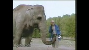 Палав слон.
