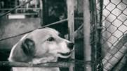 Подуене Блус Бенд - Кучето на крайния квартал