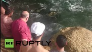 Egypt: Nine leatherback turtles rescued and released into the sea