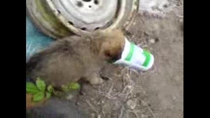Гладно Кученце