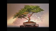 Buddha Bonsai - - Oliver Shanti friends