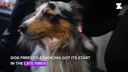 Искаш ли кучето ти да се превърне в професионален танцьор?