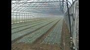 Biotelo pacciamatura su insalata serra e pieno campo.