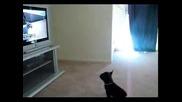 Кученце Гледа Телевизия