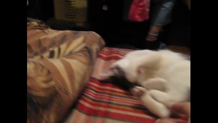 Котката ми :) - Мама Рачка