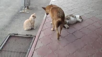 истинско приятелство