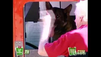 Уникалноо ! Куче кара линейка