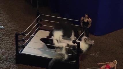 Котешки кеч