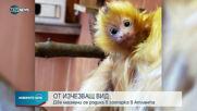 Две маймуни от застрашен вид се родиха в зоопарка в Атланта