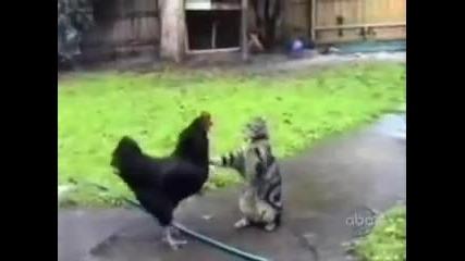 Няколко забавни котенца