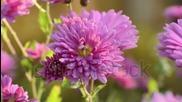 Красота и нежност в есенния ден за всички! авторски