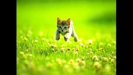 Котенца - Снимки