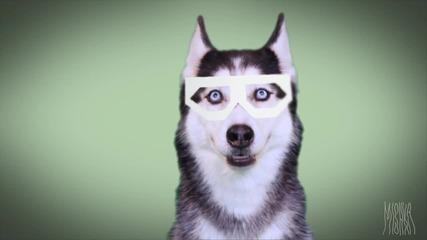 Дъбстеп куче