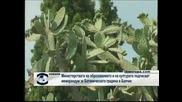 Министерствата на образованието и на културата подписват мемурандум за Ботаническата градина в Балчик