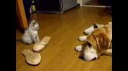Котенце Срещу Куче