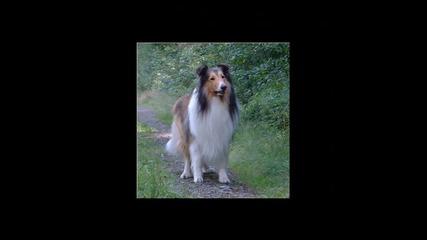 10-те най-умни кучета